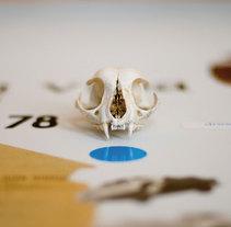 decoración estudio pobrelavaca. Un proyecto de Ilustración e Instalaciones de Mr. Zé  - Miércoles, 02 de junio de 2010 11:28:52 +0200