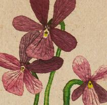 Florecillas. Um projeto de Ilustração de Natalia Vera  - 24-10-2012