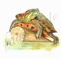 Especies invasoras. A Illustration project by Jordán Esteso Martínez - 19-02-2013