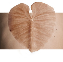 Naturaleza Mutante. Un proyecto de Fotografía, Bellas Artes, Post-producción y Collage de AMARÖ  - 22-09-2015