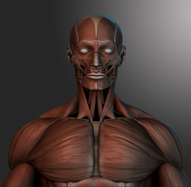 human muscles. A 3D, and Character Design project by Victor Morcillo Luque         - 24.07.2017